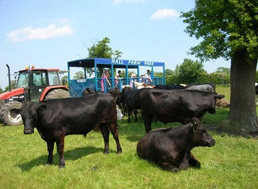 Hall Farm Park in Lincoln